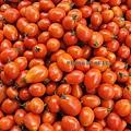 水果攤的小番茄