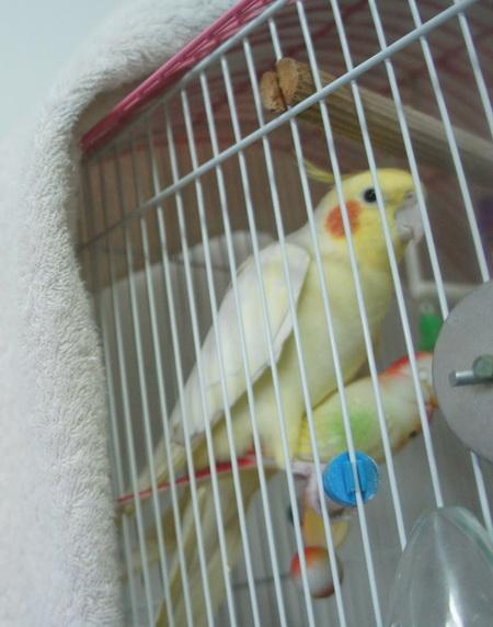 牙騎鳥 (2).jpg
