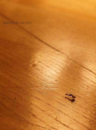 蟻.jpg