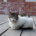 侯硐之貓 (1)