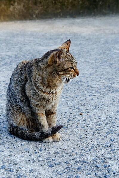 侯硐之貓 (4)