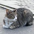 侯硐之貓 (6)