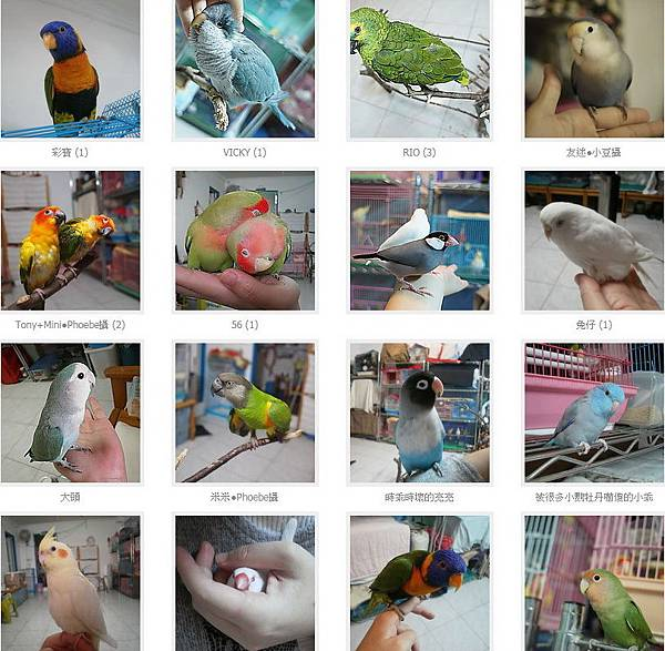 鳥民宿.jpg
