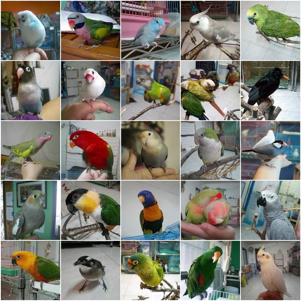 寄宿鳥寶.jpg