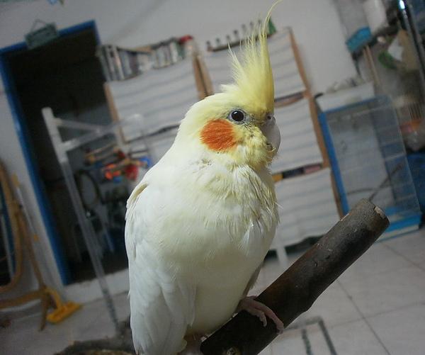 黃小鴨.jpg