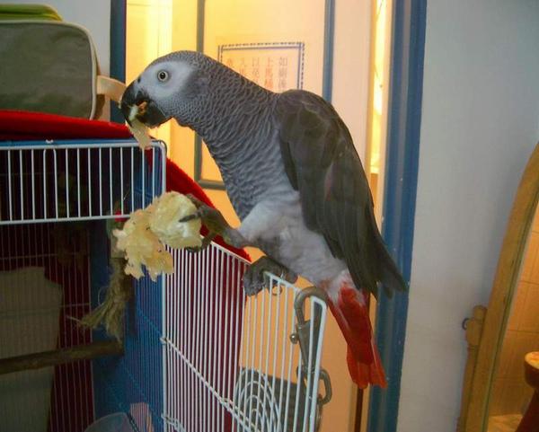 寶弟birdy (2).JPG