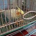 鳥點心 (3).jpg
