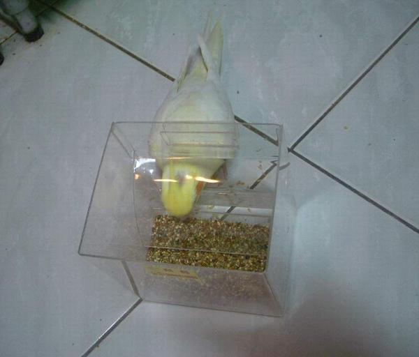 盒 (2).JPG