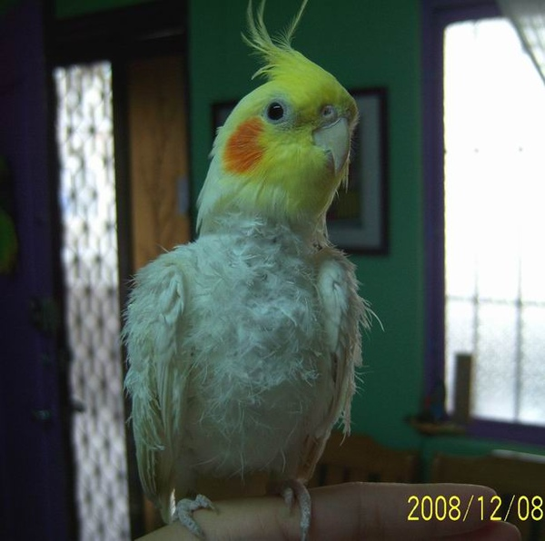 鸚鵡先生1.jpg