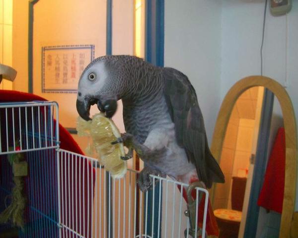 寶弟birdy (1).JPG