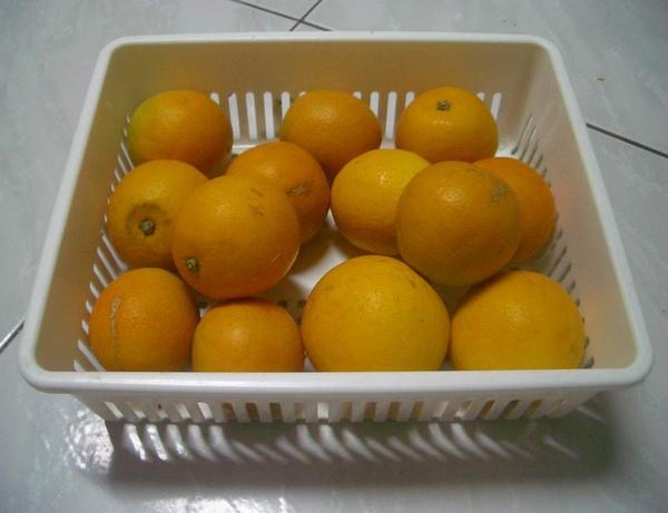 柳丁1.JPG