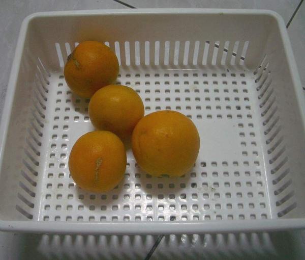柳丁.JPG