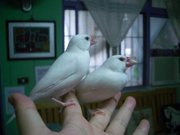 鴨憐 (5).JPG