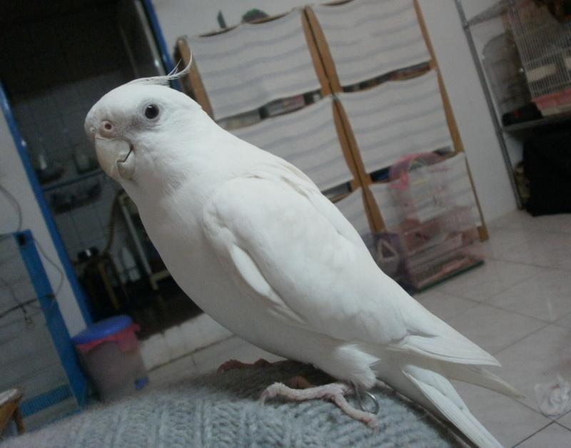 博弟 (6).JPG