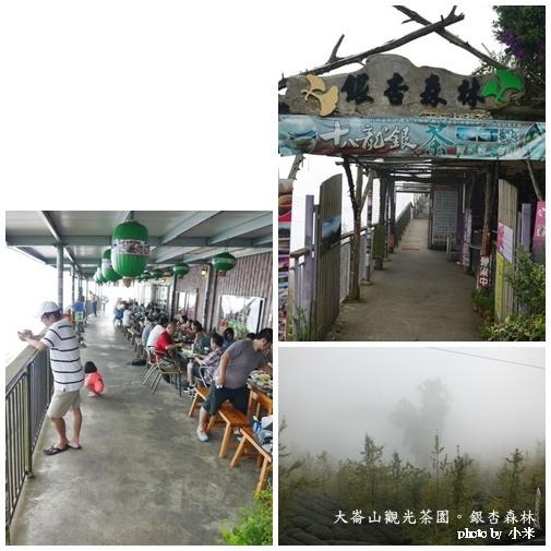 南投溪頭銀杏森林page11