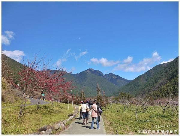 2015武陵農場櫻花季P1370018_調整大小1.JPG