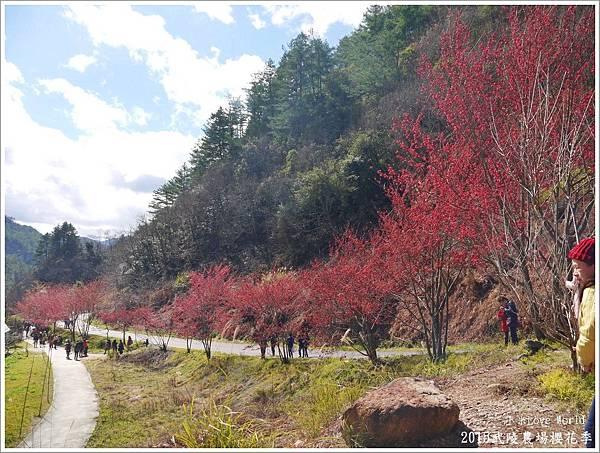 2015武陵農場櫻花季P1370030_調整大小1.JPG