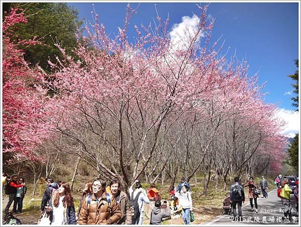 2015武陵農場櫻花季P1370088_調整大小1.JPG