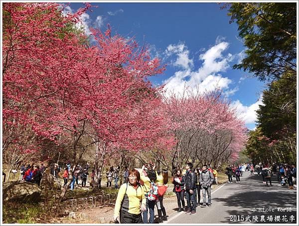 2015武陵農場櫻花季P1370092_調整大小1.JPG