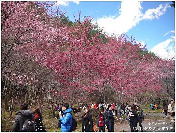 2015武陵農場櫻花季P1370097_調整大小1.JPG