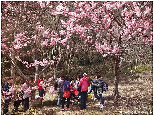 2015武陵農場櫻花季P1370120_調整大小1.JPG