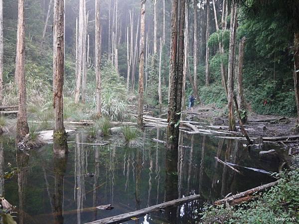 南投忘憂森林P1480535_調整大小1.JPG