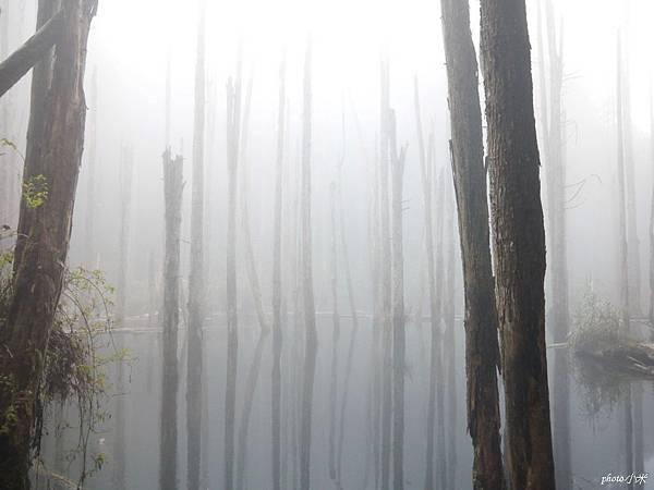 南投忘憂森林P1480545_調整大小1.JPG