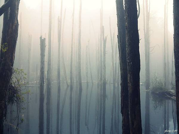 南投忘憂森林P1480546_調整大小1.JPG