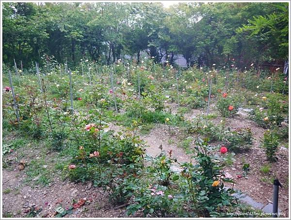 清境普羅旺斯玫瑰莊園P1410150_調整大小1.JPG