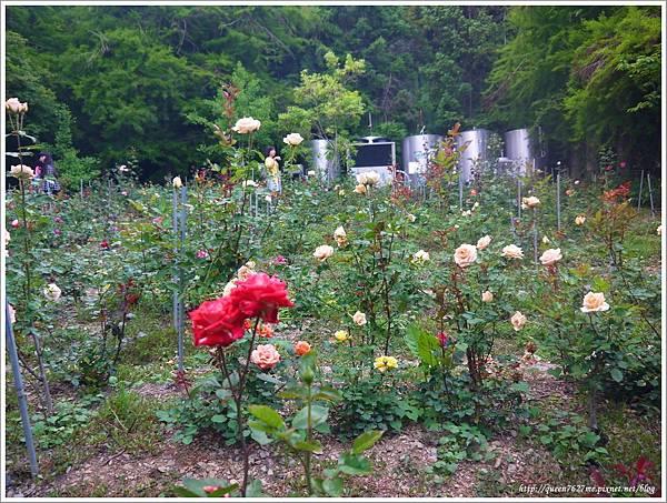 清境普羅旺斯玫瑰莊園P1410158_調整大小1.JPG