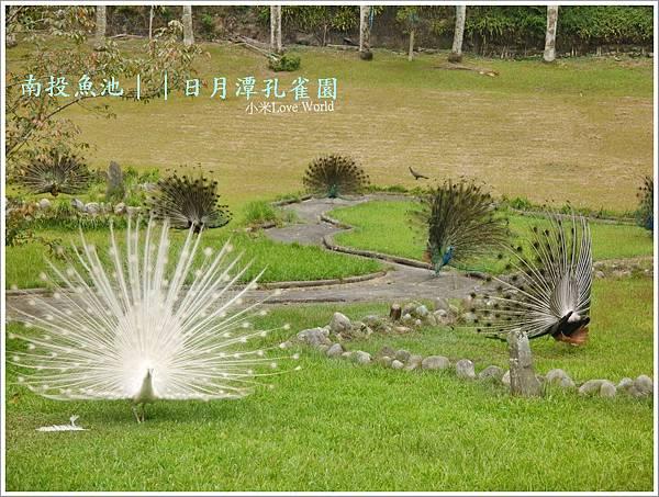 日月潭孔雀園P1450323_調整大小1.JPG