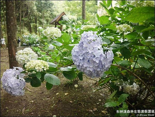 杉林溪森林生態渡假園區P1540485_調整大小1.JPG