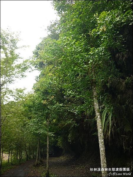 杉林溪森林生態渡假園區P1540494_調整大小1.JPG