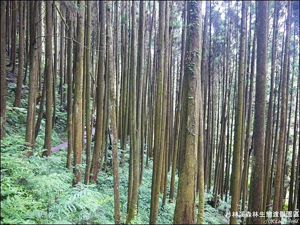 杉林溪森林生態渡假園區P1540497_調整大小1.JPG