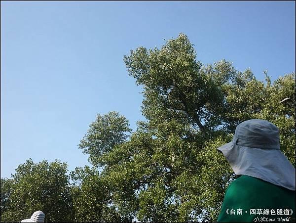 四草綠色隧道(台灣袖珍版亞馬遜河)P1520984_調整大小1.JPG