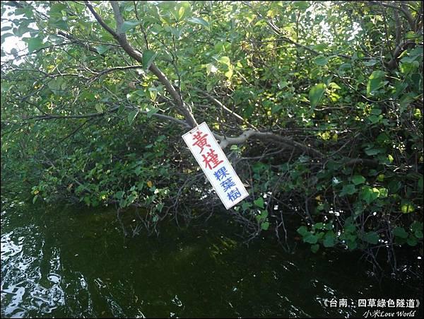 四草綠色隧道(台灣袖珍版亞馬遜河)P1520991_調整大小1.JPG