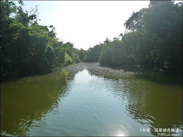 四草綠色隧道(台灣袖珍版亞馬遜河)P1520993_調整大小1.JPG