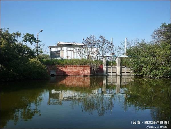 四草綠色隧道(台灣袖珍版亞馬遜河)P1530032_調整大小1.JPG