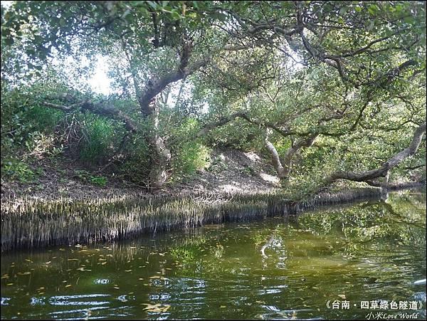 四草綠色隧道(台灣袖珍版亞馬遜河)P1530040_調整大小1.JPG