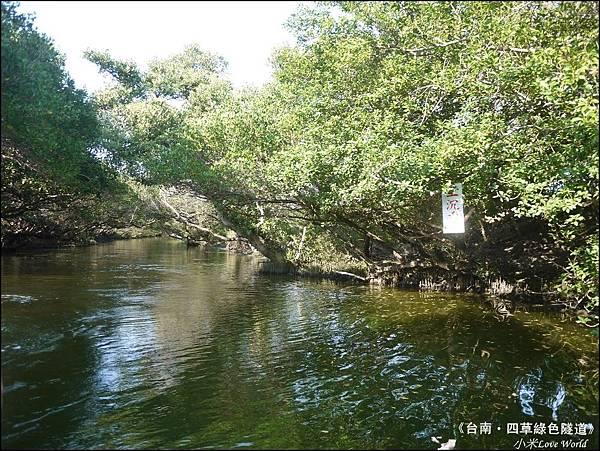 四草綠色隧道(台灣袖珍版亞馬遜河)P1530060_調整大小1.JPG