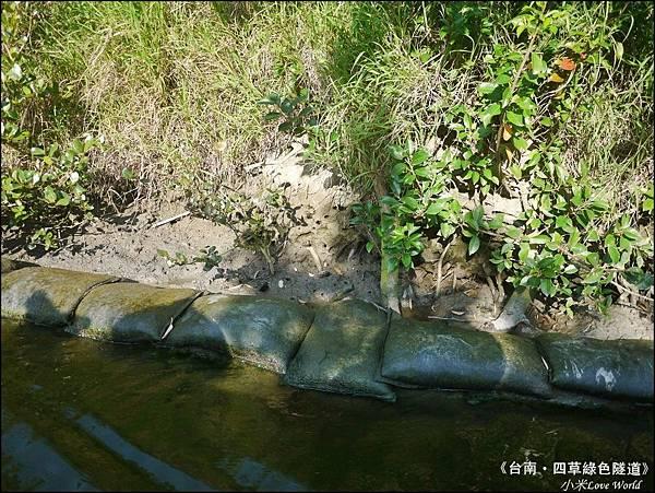 四草綠色隧道(台灣袖珍版亞馬遜河)P1530075_調整大小1.JPG