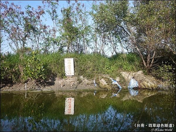 四草綠色隧道(台灣袖珍版亞馬遜河)P1530080_調整大小1.JPG