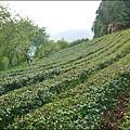 新竹山上人家森林農場P1560054_調整大小1.JPG