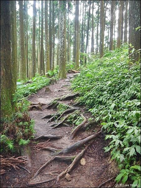 新竹山上人家森林農場P1560078_調整大小1.JPG