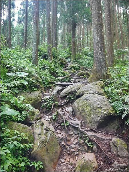 新竹山上人家森林農場P1560080_調整大小1.JPG