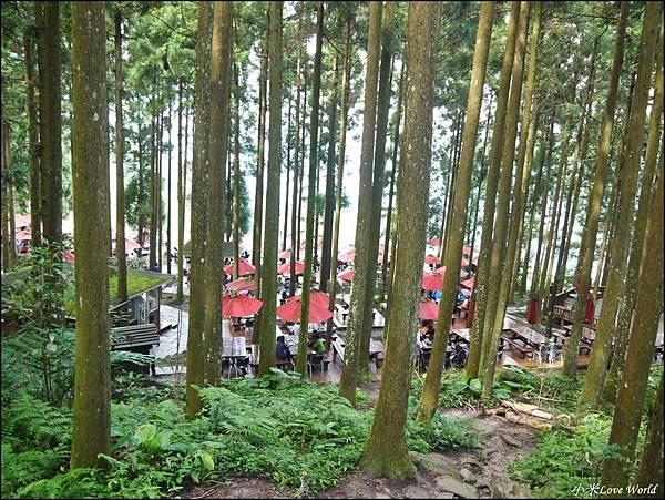 新竹山上人家森林農場P1560082_調整大小1.JPG