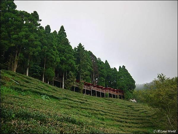 新竹山上人家森林農場P1560101_調整大小1.JPG