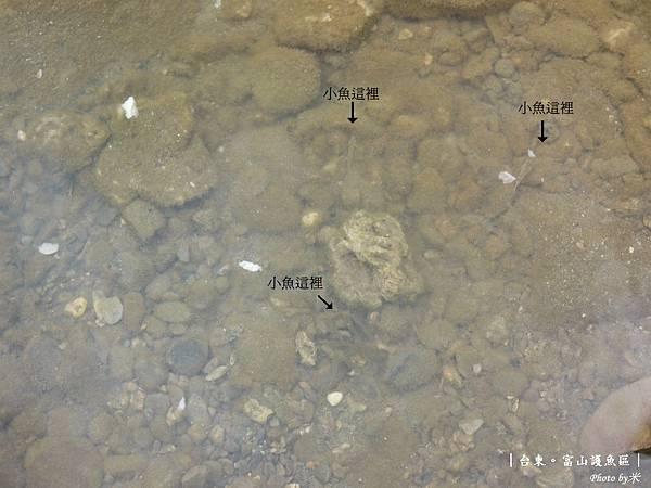 台東富山護漁區P1540979_調整大小1.JPG