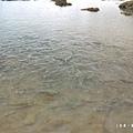 台東富山護漁區P1550002_調整大小1.JPG