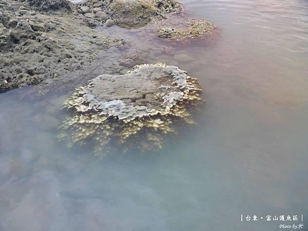 台東富山護漁區P1550022_調整大小1.JPG